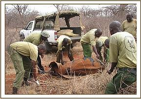 The Team rescue an orphaned elephant at Sagalla