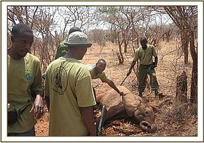 elephant rescue at kilaguni