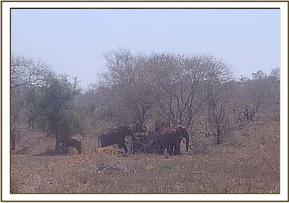 Elephants seen during game drive