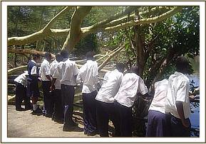 Ngami secondary at Mzima springs