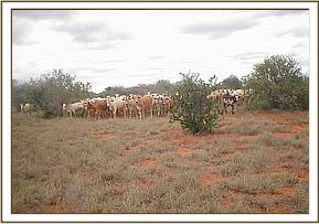 Illegal grazing at Dokota area