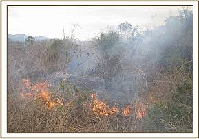 Bush fire at Kisula