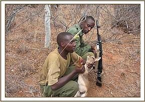 A snared Dikdik is rescued by the desnaring team