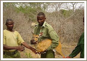 Samuel with the rescued bushbuck