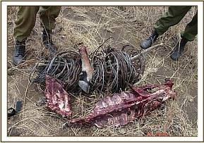 Confiscated snares and bushmeat
