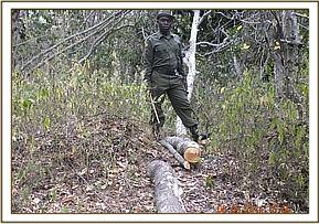 Illegal logging in the park