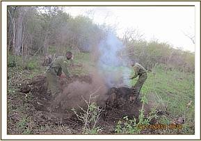 Destroying fresh charcoal kiln at Mbukoni area