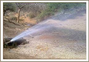 Mzima springs pipeline perforated by jumbo