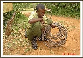 A de-snaring team member with collected snares