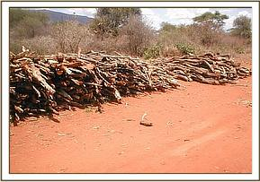 Illegal logging and vegation destrution
