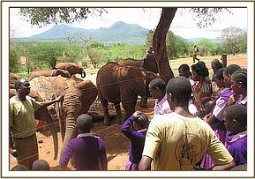mwatunge students get a talk about elephants