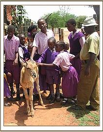 mwatunge students meet the orphan Eland