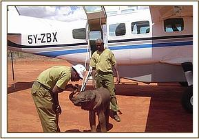 The baby elephant near the rescue plane