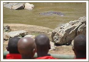 Hippos seen at lugards falls