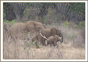 Wild elephants seen during the field trip