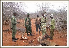 De-snaring team and KWS Rangers recover ivory