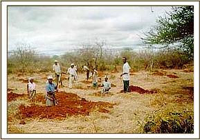 Community tree planting initiative