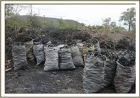 Confiscated bags of Charcoal