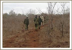The Chyulu desnaring team on patrol