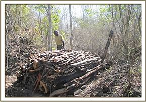 Illegal charcoal kilns