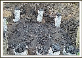 Bags of charcoal found at Utu