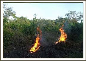 Destroying a charcoal kiln in the kibwezi forest