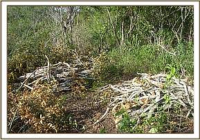 vegetation destruction in the kibwezi forest