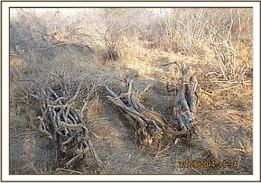Abandoned piles of dry wood
