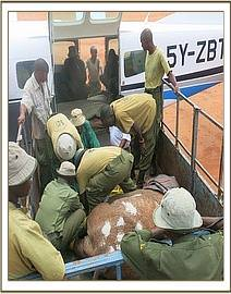 Tiva team helping keepers load a sick elephant in
