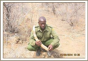 An elephant tusk recovered tiva river area
