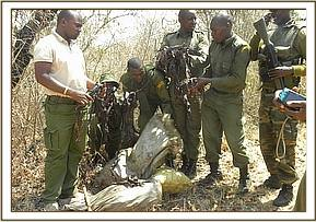 Bushmeat recovered from a poacher