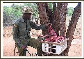 The poached Dikdik in the bicycle for hawking