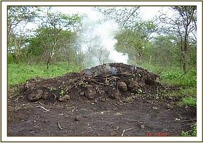 A smoking charcoal kiln