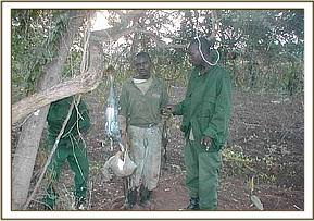 The arrested poacher with the slaughtered dikdik