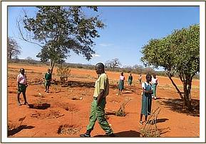 Tree planting project at Kambili Primary school