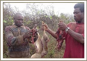 Poachers with carcasses from snared Dikdiks