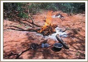 A poachers campsite with some small snares