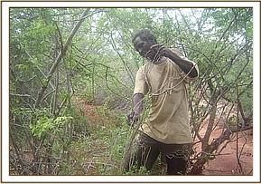 A poacher retrieving snares at Oza ranch