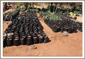 Local community tree nursery