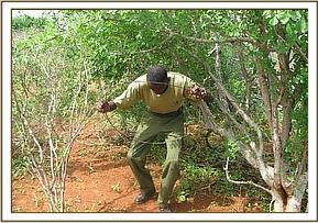 Lifting a large snare