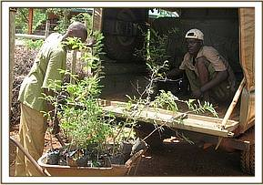 Seedlings to be distributed to communities
