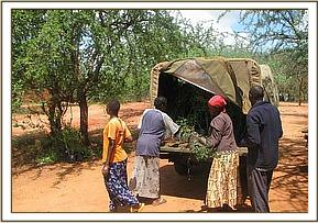 Distributing seedlings