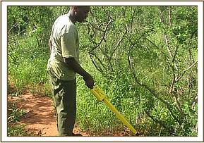 A desnarer using metal detector  to find snares