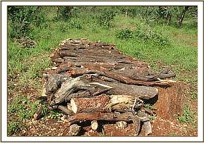 Wood for charcoal kiln