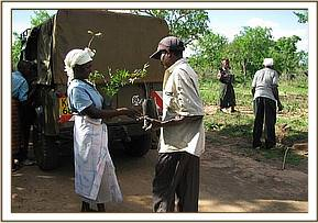 Tree seedlings donated to the community