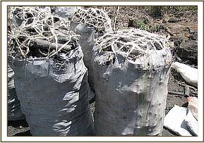 Bags of charcoal from kenze