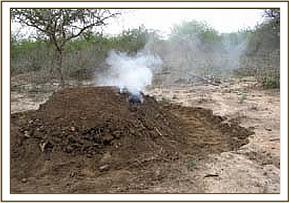 Charcoal burning at Selengei group ranch