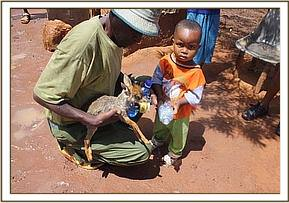 A Team member with the rescued dikdik