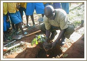 Tree planting excersice at Kajire primary school