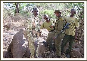 The poached elephant was from Shimba hills